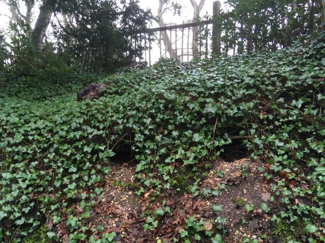 IMG 2356 st marks cemetery highcliffe badger sett